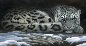 1109 snow shadows snow leopard 28 x15