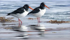 1140 oystercatchers stamp