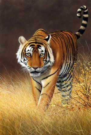 1160 softly softly ranthambore tiger