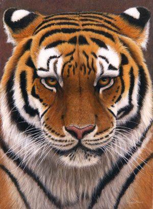 714 Intense siberian tiger 1