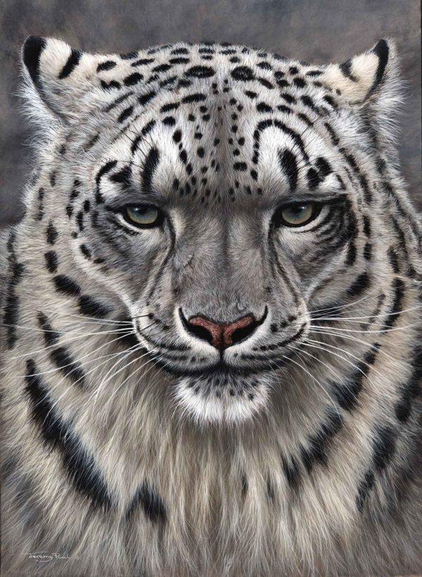 720 Snow Leopard 1