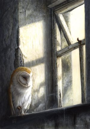 810 Barn owl window light