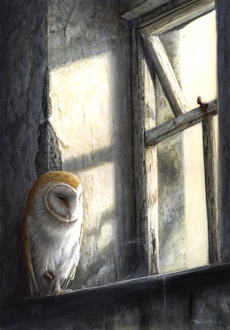 810 Barn owl window light