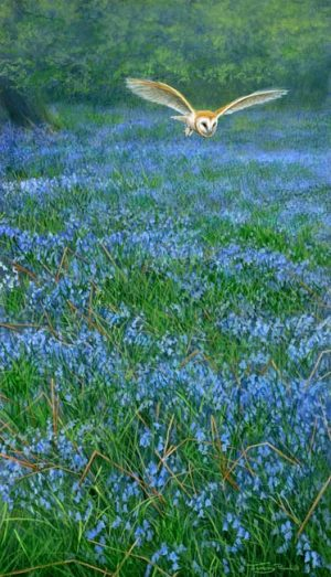 863 Barn owl over bluebells