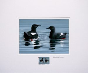 stamp black guillemots