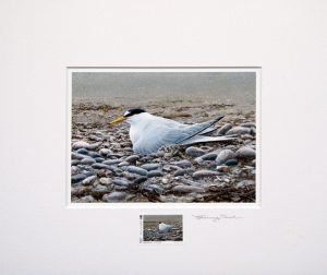 stamp little terns