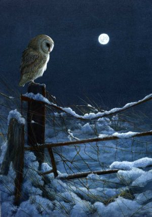 1074 Silent night barn owl