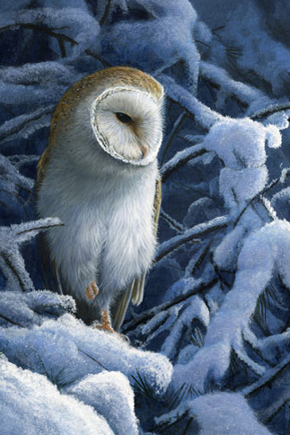 1099 Heavy snow barn owl