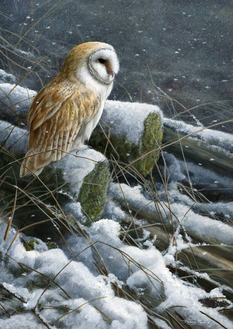 1108 Snow flurries barn owl