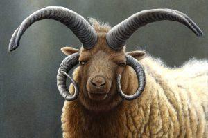 830 Loaghtan Ram