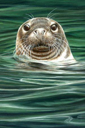 918 Curious grey seal