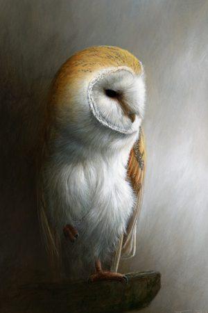 930 Barn Owl