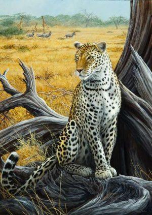 934 Leopard