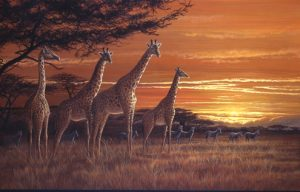 JP23 Savannah Sundown 56x38cm £50