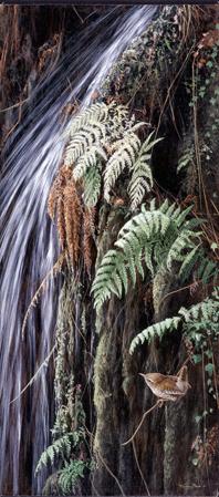 JP35 Waterfall wren 26x10cm £20