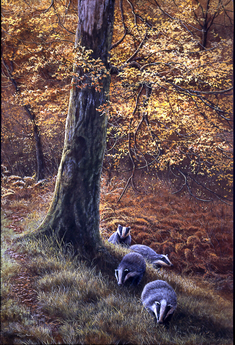 JP42 Autumn LIght 37x25cm