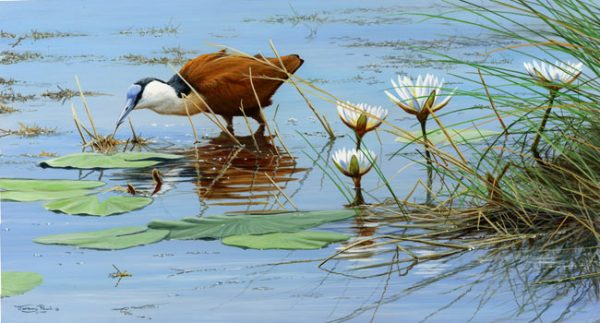 JP97 African Jacana BBC Category winner. 50 copies only 35x20cm £55
