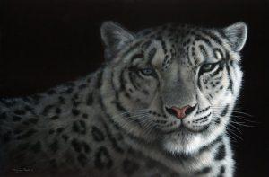1056 snow shadows snow leopard