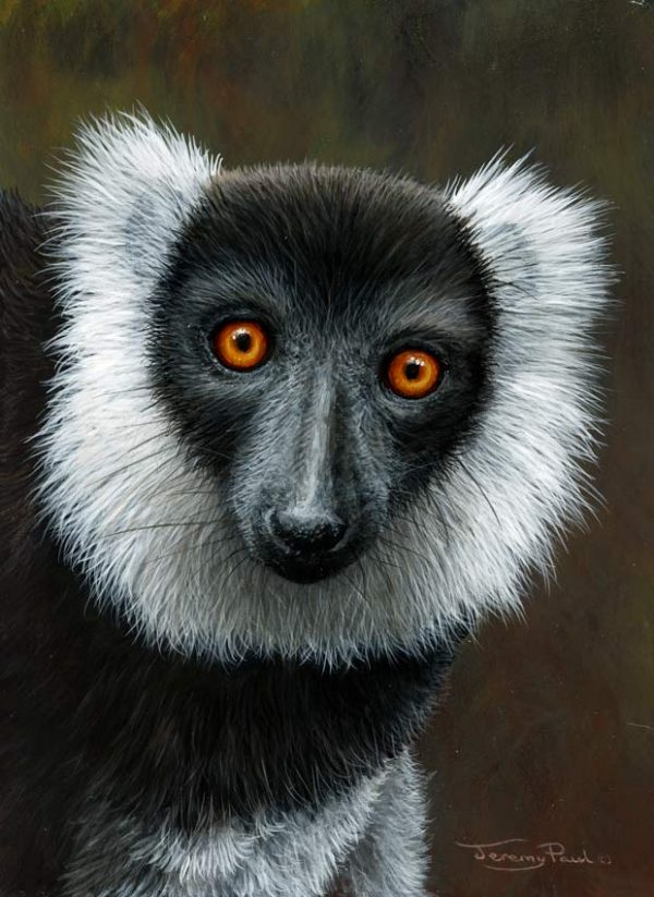 1287 Black and white ruffed lemur