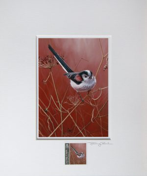 Long Tailed tit a