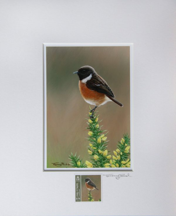 stonechat a