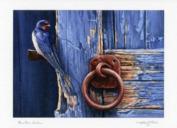 M swallow