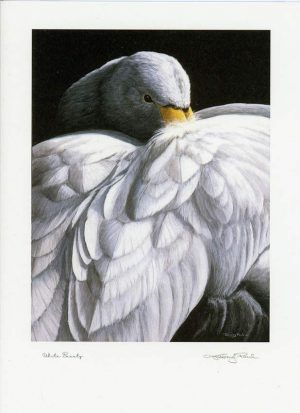 M swan