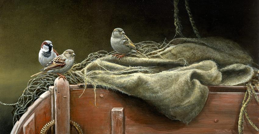 1352 winnowing sparrows